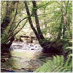 Cornwall Yurts Cardinham Woods Places